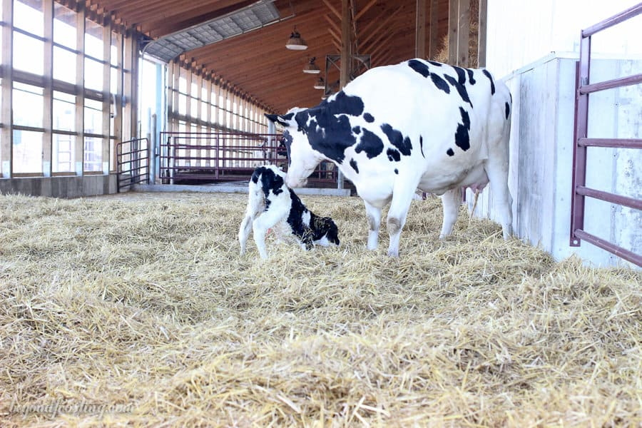 ohio-dairy-adventure_ada-mideast-8482