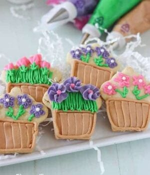 A variety of Flower Pot Cupcake Sugar Cookies with the different colored icings in the background.
